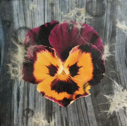 Lisa Marie Sipe Encaustic Collage Workshop